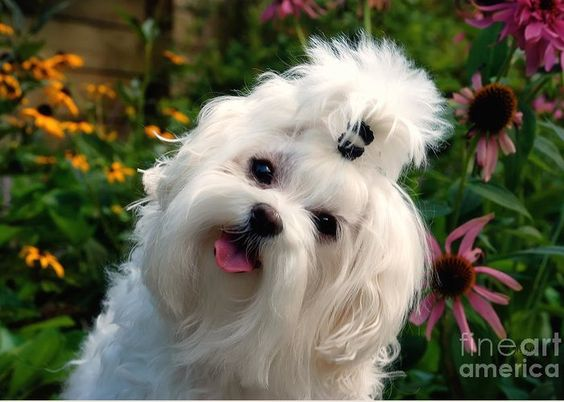 Dog Greeting Card featuring the photograph Nuttin' But Love by Lois Bryan