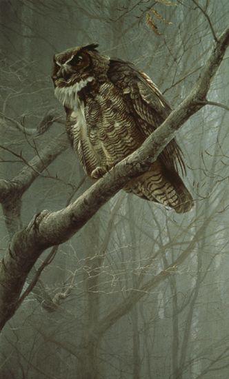 Winter Mist – Great Horned Owl by Robert Bateman: