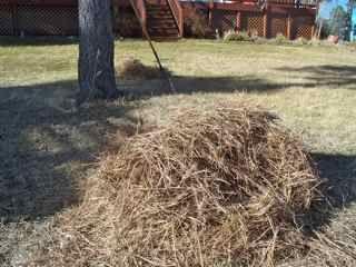 GardenerScott: What To Do With Pine Needles