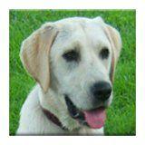 I want this  Dog Sounds / http://www.dancamacho.com/dog-sounds/