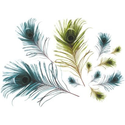 Peacock Feathers Wall Decal  Target