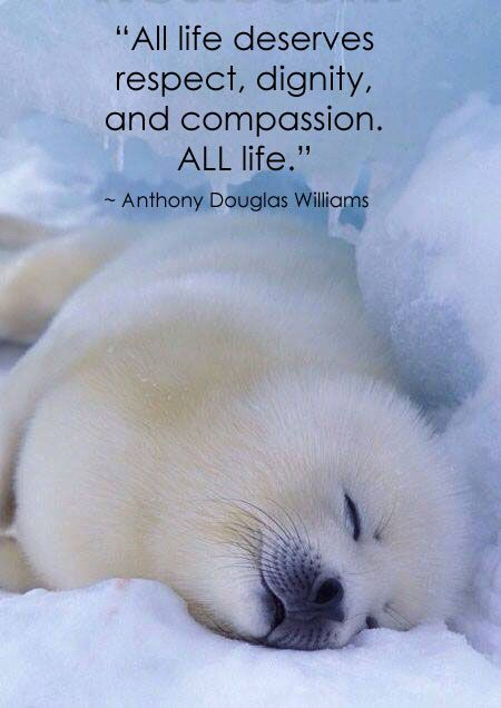 """All life deserves respect, dignity, and compassion. ALL life."" ~ Anthony Douglas Williams:"