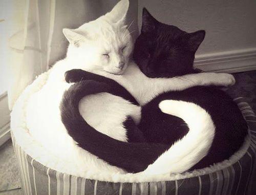 Cats Love :3 :D