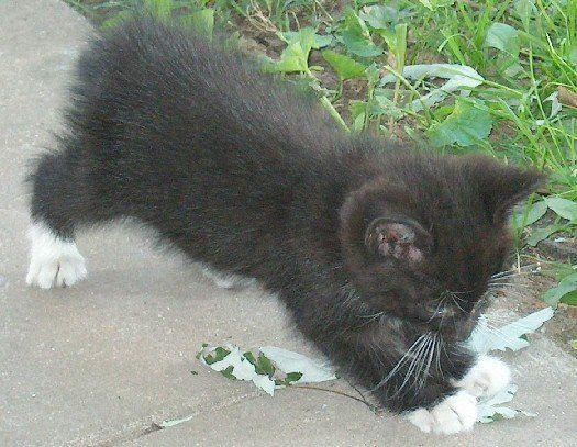Tiny Josey Wales (2008)