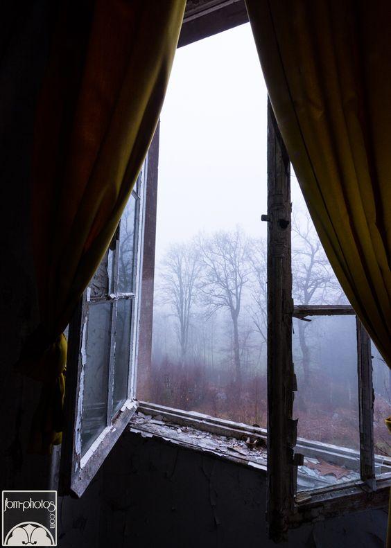 Forêt brumeuse par la fenêtre