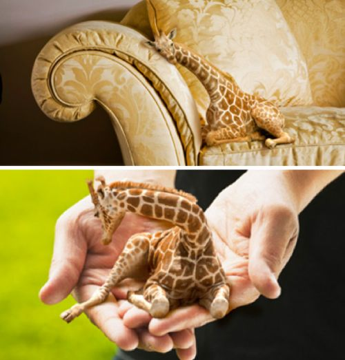 Teacup giraffe  Etsy