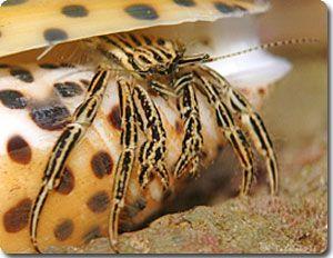 絶対に遭遇したくない危険生物ランキング、トップ10 : カラパイア