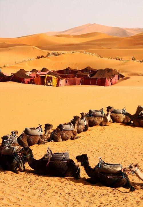 Camels caravan in Sahara Desert, Algeria — Stock Photo © muha04 ...