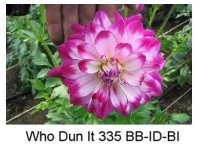 WhoDunItW39_JPG_jpg_jpg.jpg (384×288)