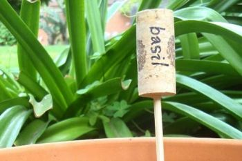 Wine Corks herb markers.