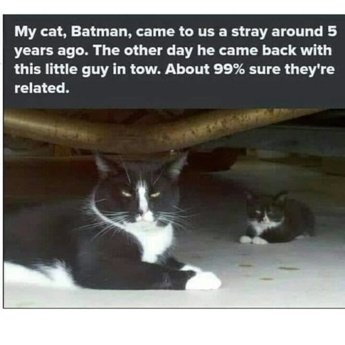 No Text Funny Animal Memes Of The Day 30 Pics Funny Animal Memes Cats Cat Memes
