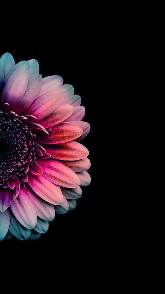 Pin By Jasmeen Sada On Flowers Flower Iphone Wallpaper Flower Phone Wallpaper Flower Background Wallpaper