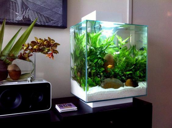 Fluval edge 46 litre low tech nano aquarium planted nano for Fluval edge fish tank