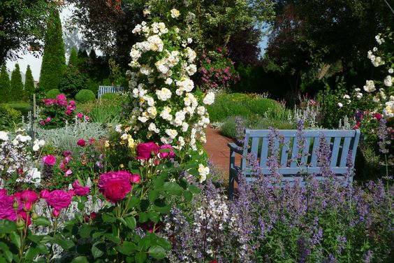 Summerfeeling im Rosengarten... - Bilder und Fotos