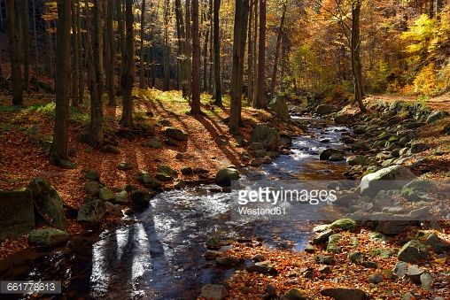 Stock Photo : Germany, Saxony-Anhalt, Harz National Park, Ilse River at Ilse Valley in autumn