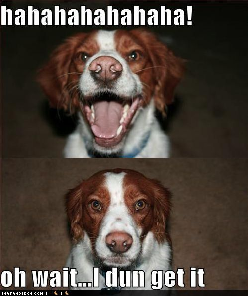 dog jokes with pictures - Google Search | save the animals ...