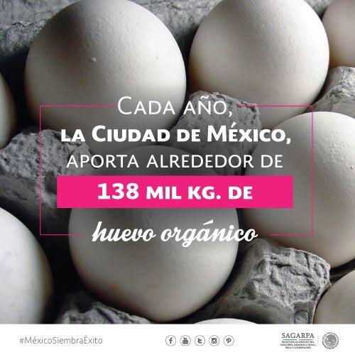 Cada año, la ciudad de México aporta alrededor de 138 mil KG. de huevo orgánico. SAGARPA SAGARPAMX #MéxicoSiembraÉxito