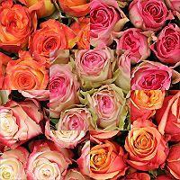 Roses - Assorted Bicolor - 125 Stems - Sam's Club $107.98