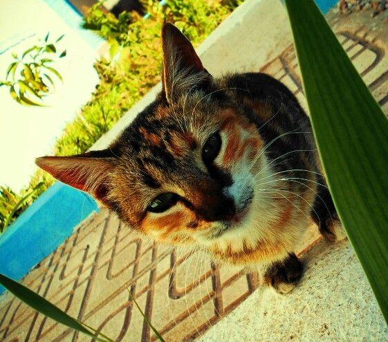 Edguar, un mignon et jaloux chat .. il commance a ranronner chaque fois qu il me voit avec un autre chat..