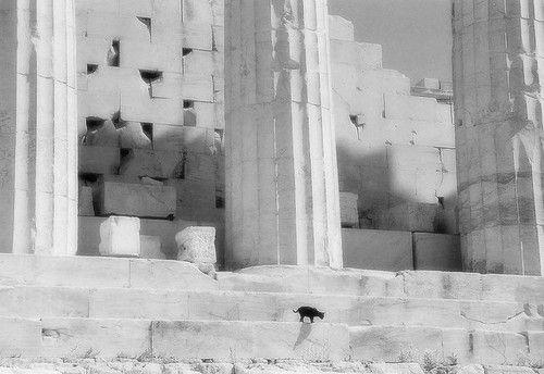 (via Greek Cat   Flickr – Compartilhamento de fotos!)