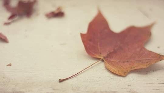 ما الذكـرى سـوى ورقة خريـف لا ترتعـش فـي الهـواء هنيهـة حتـى تكـف ن بالتـراب دهـر ا Autumn Trees Fall Colors Happy November