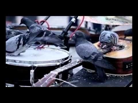 """Pigeon jazz in the city (世界初、""""ハトによるジャズアンサンブル""""で道行く市民にジャズの楽しさを啓蒙)"""