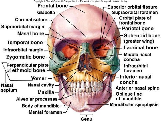 Axial Skeleton II and Appendicular Skeleton