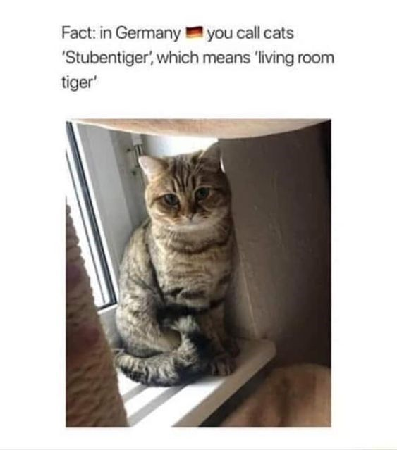 How Do You Say Cat In German Cat In German Cats Cute Animals
