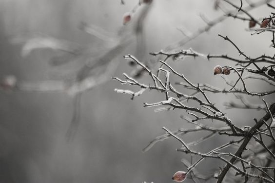 All sizes | winter | Flickr - Photo Sharing!
