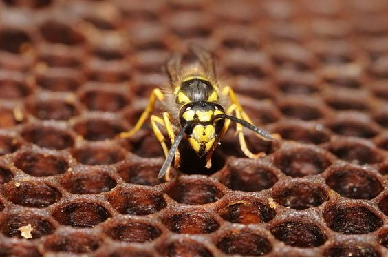 A wasp on a hive.