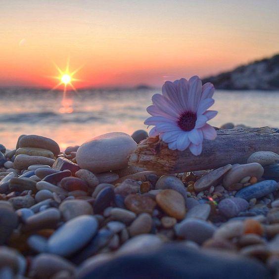 """piccenin: """" Le migliori qualità della natura umana, come i fiori in sboccio, si possono conservare solo avendone la massima cura. Eppure noi non trattiamo né noi stessi né gli altri con tanta tenerezza. Henry D. Thoreau """""""