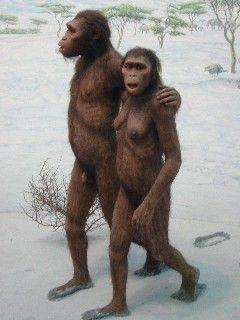 Australopithecus afarensis.
