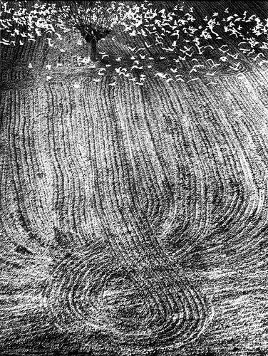 visualmooddiary:  Mario Giacomelli, Landscapes