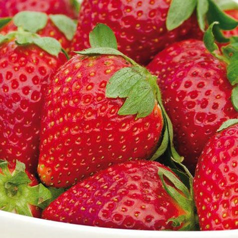 Albion Everbearing Strawberry Everbearing Strawberries Strawberry Plants Strawberry