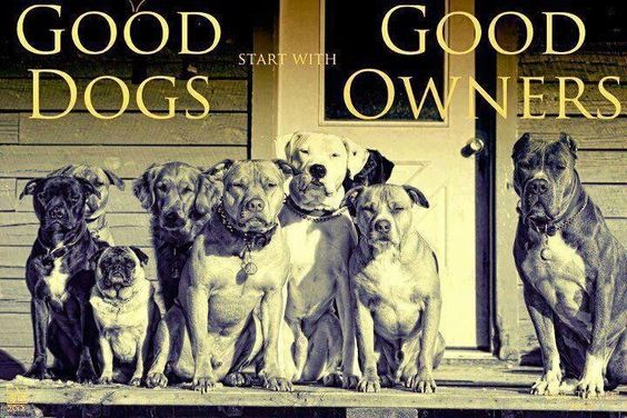 Good dogs!