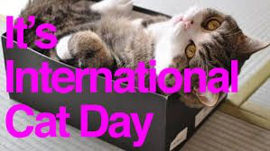 Image result for international cat day