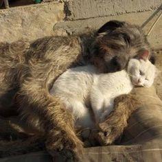 General Cuddles