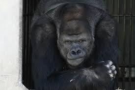 「東山動植物園」の画像検索結果