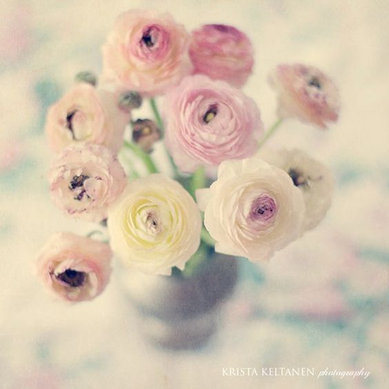 Ruusuja: Flowers Persian, Buttercup Hrv, Persian Buttercups, Art Prints, Beautiful Flowers, Pretty Pastel, Bouquet Flowers, Buttercups Lovely, Buttercups Pretty