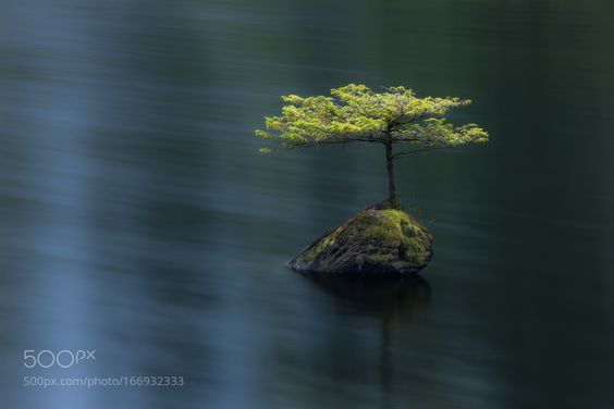 Fairy Lake Hemlock by AdamGibbs. Please Like http://fb.me/go4photos and Follow @go4fotos Thank You. :-)