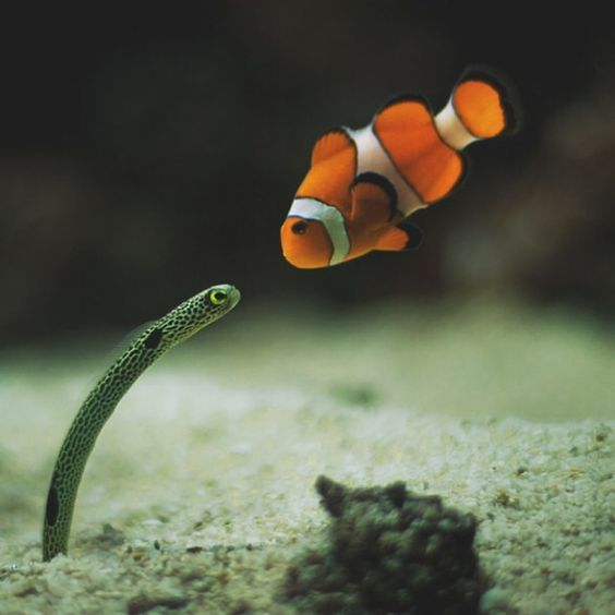 "@nature's photo: ""Everyone knows Nemo 
