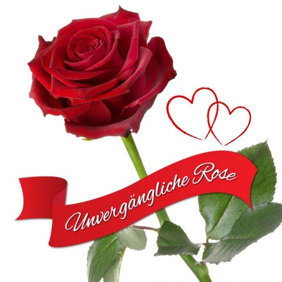 Das (wirkliche) Symbol ewiger Liebe – die Unvergängliche Rose. Direkt nach dem Pflücken veredelt, bleibt sie jahrelang frisch und duftend. via: www.monsterzeug.de