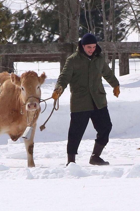 Workin' with cows!! Life 2-26-14 Toronto