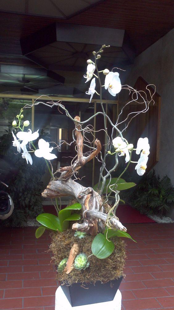 orquídeas floreria zen