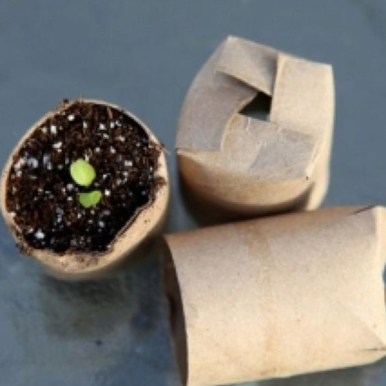 Use your old TP rolls to start growing your spring plants!
