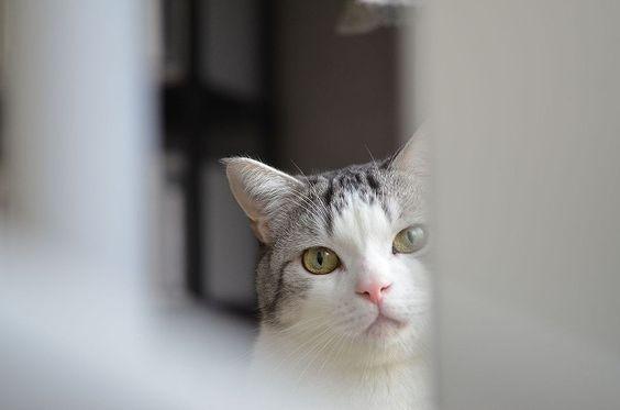 完全保存版 猫の飼い方 (1) 猫を迎える前に用意すべき物まとめ | ライフ | マイナビニュース