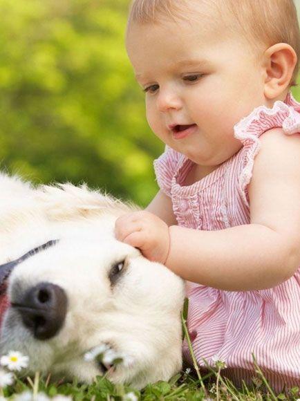 12 cachorros fofos com crianças