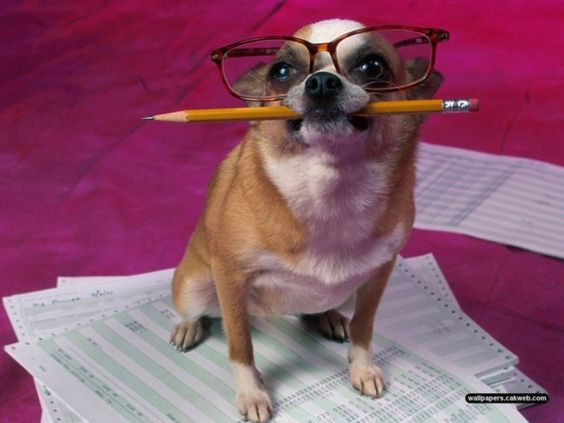 funny dog preparing for exam http://funnyneel.com/funny-pictures…