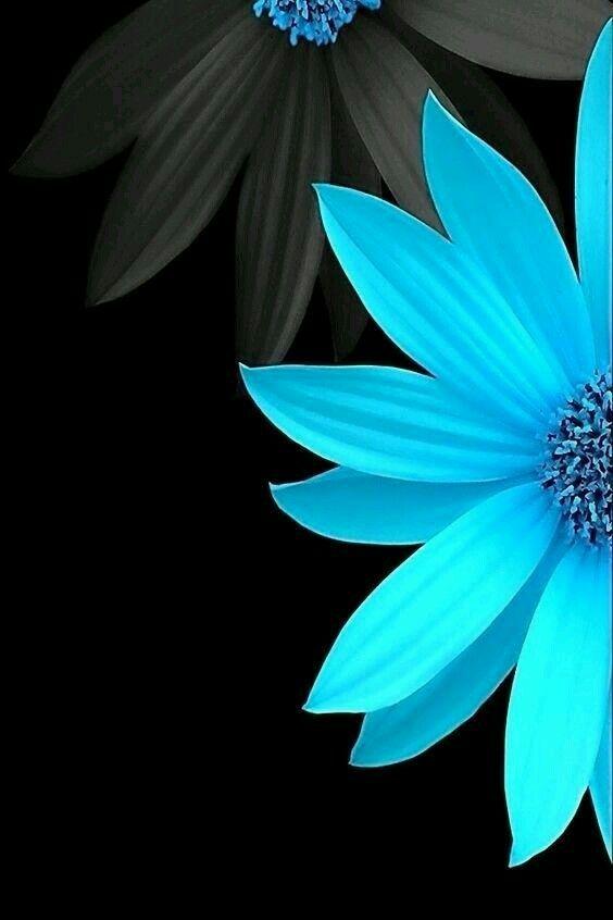 Black Blue In 2019 Black Phone Wallpaper Flower
