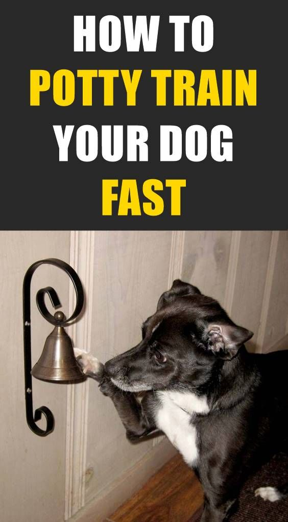 How To Train A Dog To Ring A Bell To Go Potty Outside Dog Potty Training Training Your Dog Potty Training Puppy